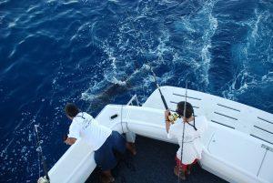 Renta de embarcación para pesca deportiva