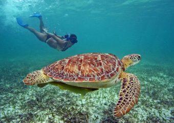 Tours en Mazatlán y Cancún/ Riviera Maya