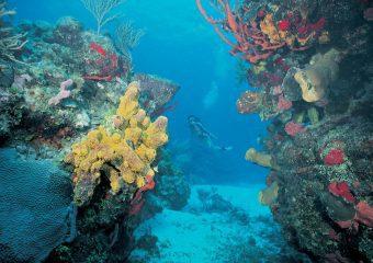 Esnórkel en Cancún -Riviera Maya