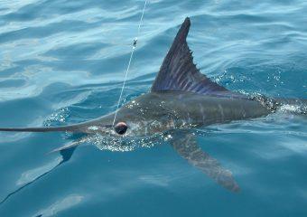 sport-fishing-mazatlan-2
