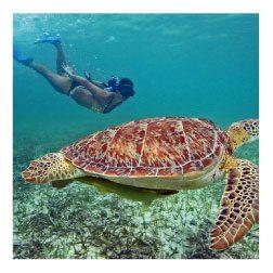 Paseos en Cancún- Riviera Maya